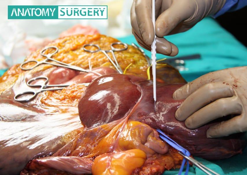 multimediamedical-cadaver-lab-service